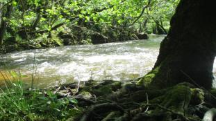 Enlacés sur la rivière