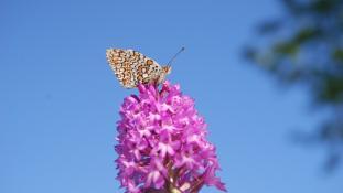 Orchidée et papillon