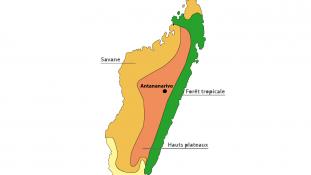 Trésors de Madagascar