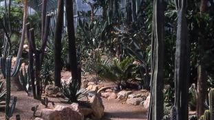 La serre de Madagascar