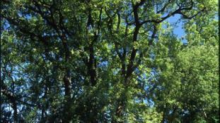 A côté du jardin mexicain, l'arboretum.