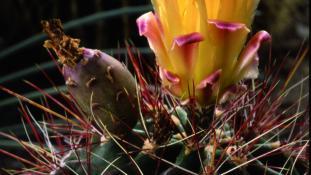 Plantes des milieux extrêmes