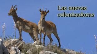 Las nuevas colonizadoras