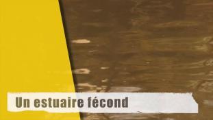 La Rance - un estuaire fécond…