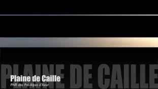 Teaser-Caille-Été