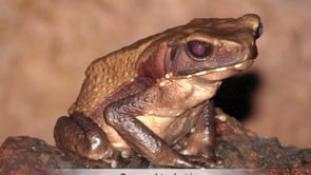 Reptiles et Amphibiens de Guyane