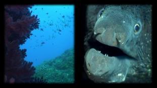 Marseille, le monde sous-marin - Episode 1