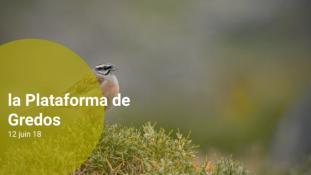 2018-Sierra de Gredos-06/11