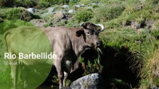 El Melizzo-2011