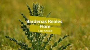 Bardenas Reales-6/10 Flore