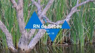 2008-RN-Sebes-3/20