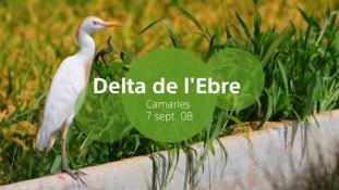 2008-Delta de l'Ebre-5/20