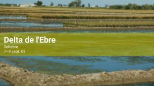 2008-Delta de l'Ebre-6/20