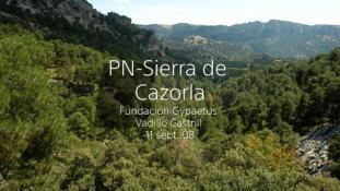 2008-Sierra de Cazorla-7/20