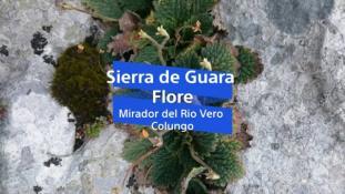 2018-Mirador del Rio Vero-Flore