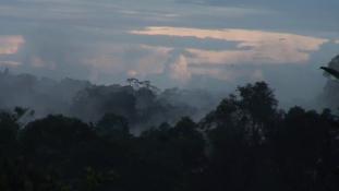 Voyages en forêt des pluies #07