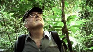 Voyages en forêt des pluies #06
