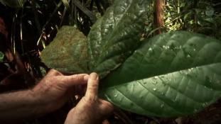 Voyages en forêt des pluies #09
