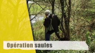 "Opération ""saules"""