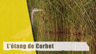 L'étang de Corbet