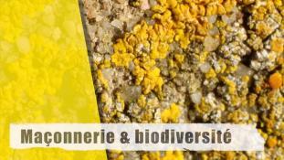 Maçonnerie et biodiversité