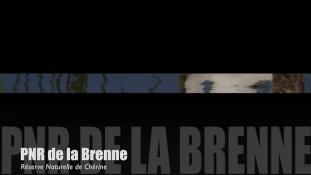 Teaser Brenne