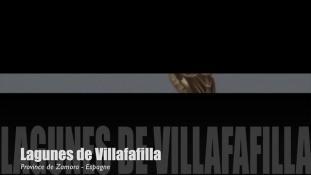 Teaser-Villafafila