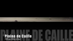Teaser-Caille-Hivers