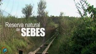 Sebes-Baguage ornithologique