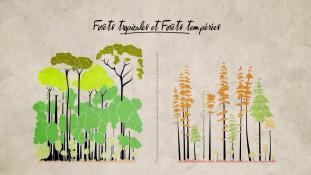 Série-Apprendre la nature #13