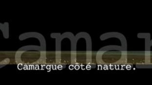 Teaser-Camargue