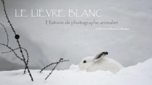 Lièvre blanc - 1/8