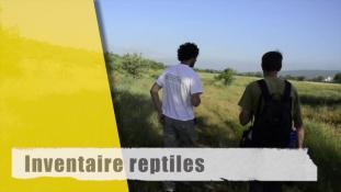 Inventaire reptiles-1/2