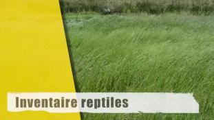 Inventaire reptiles-2/2