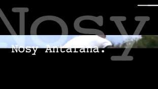 Teaser-Nosy Antafana