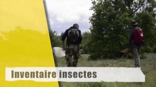 Inventaire Insectes