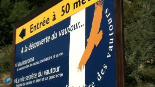 Vautours fauves en Grands Causses