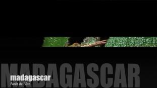 Teaser-Madagascar
