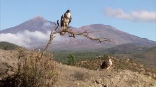 Canarias, a la sombra de los volcanes