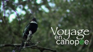 Voyage en canopée - Le Film