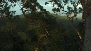 Voyage en canopée - Episode 1