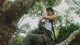 Voyage en canopée - Episode 2