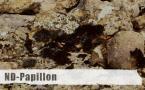 ND-Papillon