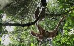 Voyage en canopée - Episode 7